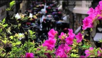 White and pink flowers on a ledge above a crowded street