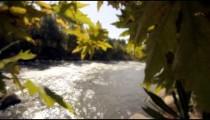 Racking focus footage of Jordan river through branches