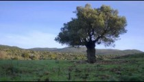 Time lapse of morning light covering rural hills and a single tree
