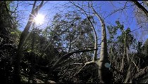 Time-lapse shot of a wooded area and the sun.