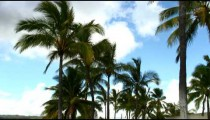 Palm trees in the breeze with a clouded blue sky in Hawaii.