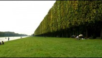 Long line of a shrubbery in the Versailles Palace gardens in France.