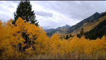 Time-lapse of yellow-leafed trees in a mountain landscape.