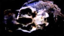 Abstract visualization of a rotating animal skull.