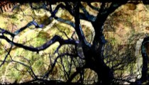 Abstract visualization of a silhouetted tree.