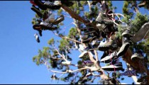 Lots of shoes hung in a tree