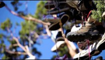 Many pairs of shoes hanging in a tree