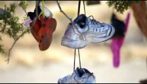 Shoes hanging in a tree