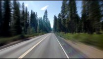 Straight highway through forest