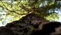 Pine tree details