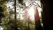 Sun shining through the trees in a forest in Northern California.