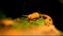 Orange slug crawling over mossy log