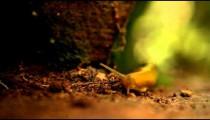 Orange slug crawling over forest ground