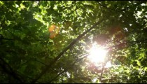 Sun shining behind leaves and branches