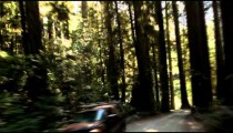 Driving down road in redwood forest