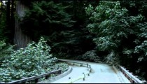 Driving across small bridge in redwood forest