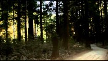Driving on dark road in redwood forest