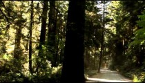 Driving shadowy road in redwood forest