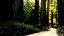 Traveling down dark road in redwood forest