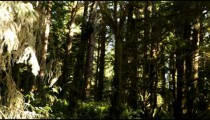 Density of pine forest