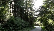 Road of a pine forest