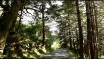 Shaded forest road
