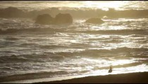 Seagull walking along the shore