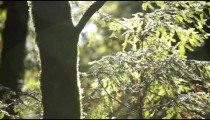 Forest fern in sun and wind