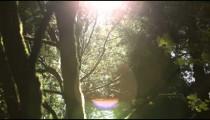 Sun shines through foliage