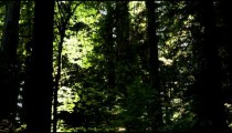 Shadowed deciduous forest