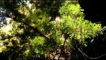 Thin Branch in Light Breeze