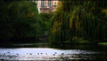 Ducks in Saint James Park