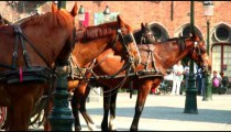 Horses tethered to carriages.