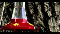 Hummingbird drinking from a bird feeder.