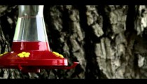 Hummingbird flying away from a bird feeder.
