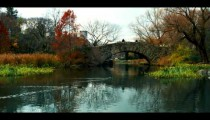 Royalty Free Stock Footage of Ducks swimming towards a bridge in Central Park, Manhattan, New York.