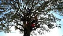 Children in a tree in Kenya, Africa.