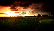 Cornfield at sunset in Kenya.