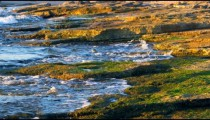 Royalty Free Stock Video Footage of the mossy shore at Dor Beach shot in Israel at 4k with Red.