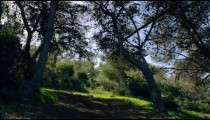 Royalty Free Stock Video Footage panorama of forested hillside shot in Israel at 4k with Red.