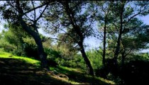 Royalty Free Stock Video Footage of forested hillside shot in Israel at 4k with Red.