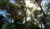 Royalty Free Stock Video Footage of sunshine through branches shot in Israel at 4k with Red.