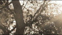 Royalty Free Stock Video Footage of sunshine through pine branches shot in Israel at 4k with Red.