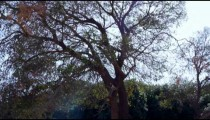 Royalty Free Stock Video Footage of tree with exposed root system shot in Israel at 4k with Red.