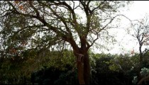 Royalty Free Stock Video Footage of exposed root system of tree shot in Israel at 4k with Red.