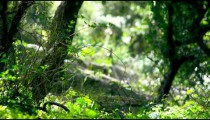 Royalty Free Stock Video Footage of Carmel forest floor shot in Israel at 4k with Red.