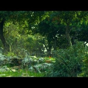 Royalty Free Stock Video Footage of Carmel mountain forest shot in Israel at 4k with Red.