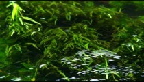 Royalty Free Stock Video Footage of underwater foliage shot in Israel at 4k with Red.