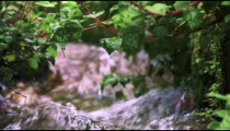 Stock Video Footage closeup of foliage and water in an aqueduct shot in Israel at 4k with Red.