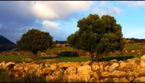 Royalty Free Stock Video Footage of a pastoral hillside shot in Israel at 4k with Red.